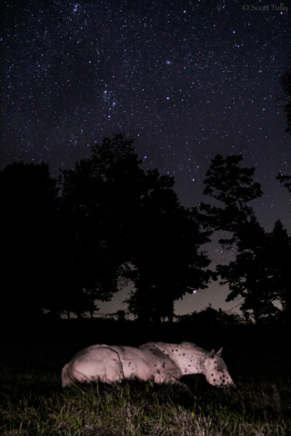 Venus rising with the Constellation Perseus over sleeping Apaloosa named May.